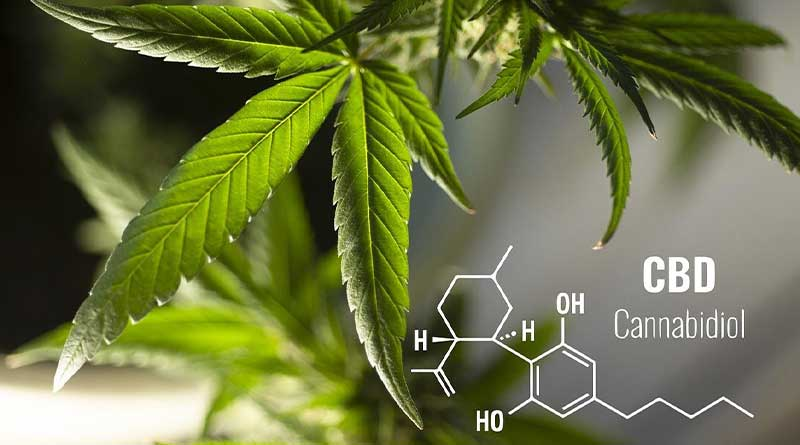 Tips for Wholesale Business for CBD Products